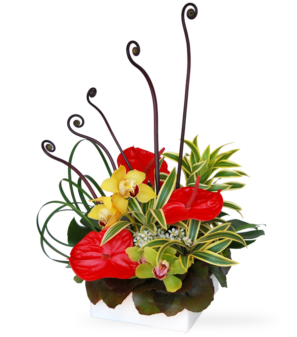 Almost Paradise by Select Florists in Elmhurst, Il